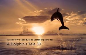 Dolphin1-300x193